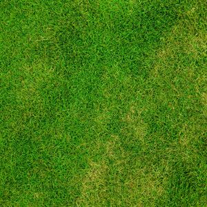 abstract_backdrop_background_field_football_fresh_golf_grass-1354488